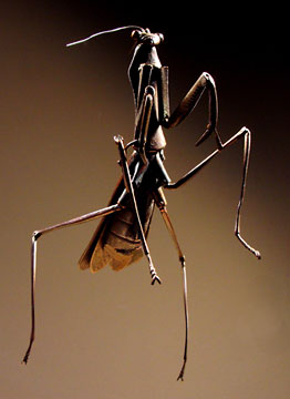 Springing Mantis - photograph copyright 2005 by J R Compton